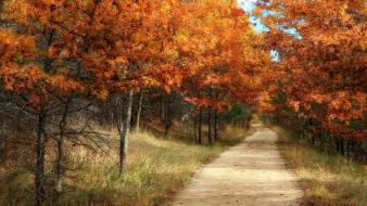 Autumn forests trees wallpaper