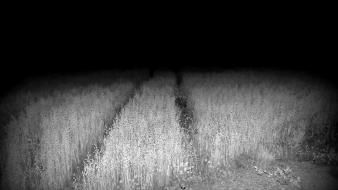 Black fields horror monochrome nature wallpaper