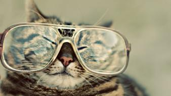 Cats glasses hipster wallpaper