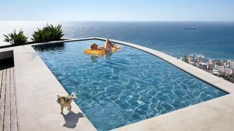 Dogs funny swimming pools wallpaper
