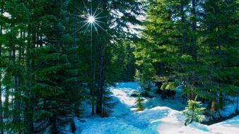 Forests nature snow winter wallpaper