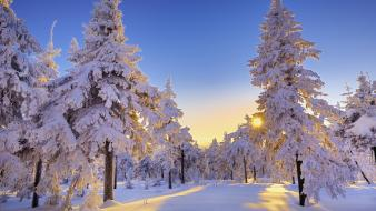 Germany snow trees winter wallpaper