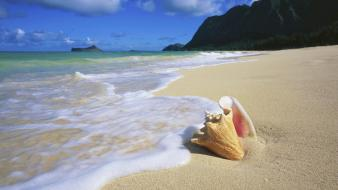 Hawaii oahu beaches seashells wallpaper