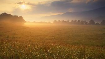 Pices fields plains sunlight wallpaper