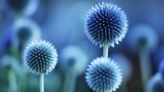 Thistles abstract blue flowers macro wallpaper
