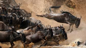 Africa national geographic nile animals gnu wallpaper