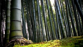 Bamboo forests jungle nature wallpaper
