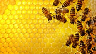 Bees honeycomb Wallpaper