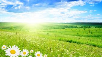 Bright daisy flowers green field wallpaper