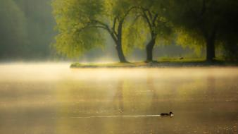 Ducks landscapes nature trees water wallpaper