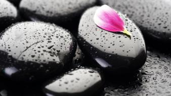 Flower petals macro rocks stones water drops Wallpaper