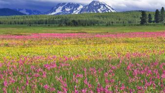 Flowers grass hills landscapes mountains wallpaper