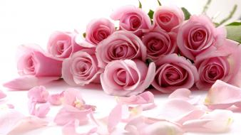 Flowers pink roses white background wallpaper