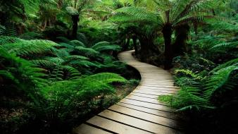 Jungle landscapes rainforest trail wallpaper