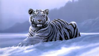 Siberian tiger animals snow Wallpaper