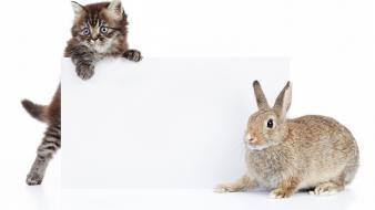 Animals cats rabbits white background wallpaper