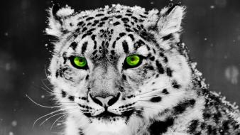 Animals green eyes photo manipulation predator selective coloring wallpaper
