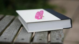Bench books pink flowers wallpaper