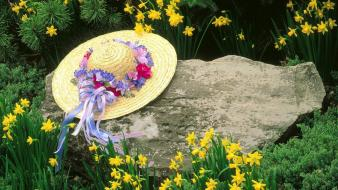 Daffodils hats louisville yellow flowers wallpaper