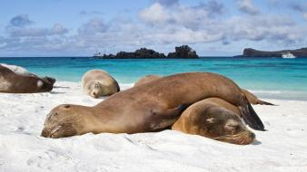Ecuador animals sea lions wallpaper