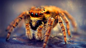 Omg horror spiders tarantula wallpaper