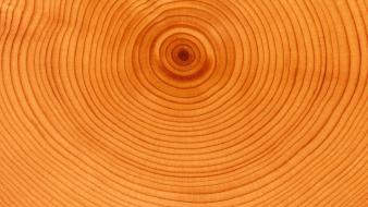 Rings textures wood wallpaper