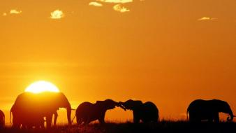 Africa kenya animals elephants mara wallpaper