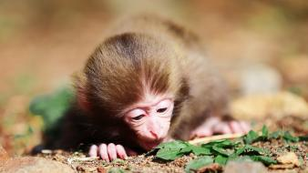 Animals baby monkeys nature wallpaper
