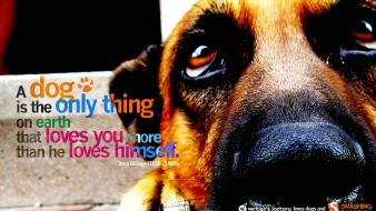 Animals dogs quotes text wallpaper