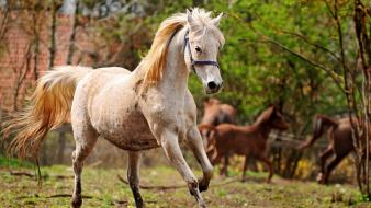 Animals horses running wallpaper
