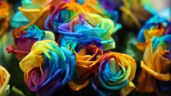 Flowers multicolor roses wallpaper