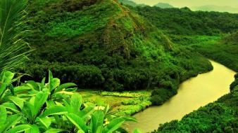 Forests green landscapes nature scenario wallpaper