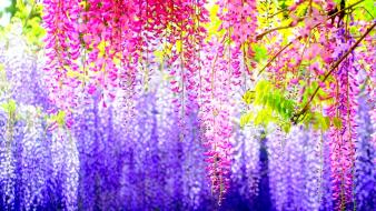 Japan bokeh flowers hanging multicolor wallpaper