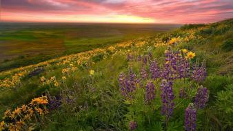 Landscapes nature wildflowers Wallpaper