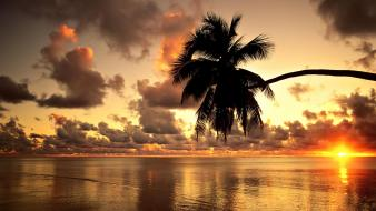 Mauritius beaches clouds coconut tree nature Wallpaper