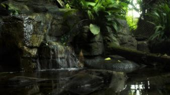 Nature outdoors rainforest realistic wallpaper