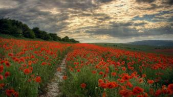 Nature poppies red flowers skyscapes wallpaper