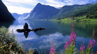 Norway landscapes mountains nature wildflowers Wallpaper