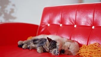 Animals cats couch dogs kittens wallpaper