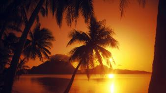 Beaches landscapes nature palm trees sunset Wallpaper