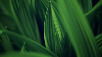 Closeup grass green nature wallpaper