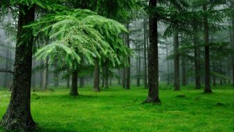 Forests grass green outdoors trees wallpaper