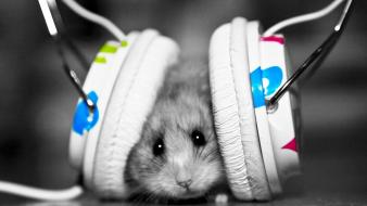 Funny hamsters music wallpaper