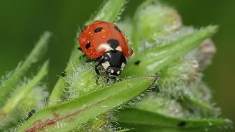 Insects ladybirds nature plants wallpaper
