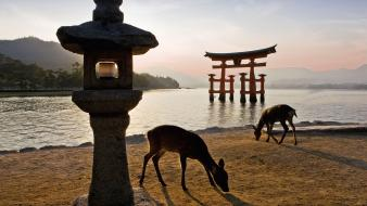 Itsukushima shrine japan animals gate shinto wallpaper