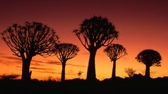 Namibia landscapes silhouettes trees wallpaper