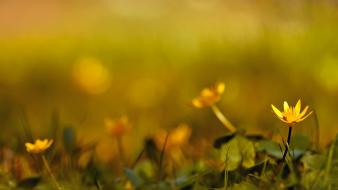 Depth of field flowers grass nature plants Wallpaper