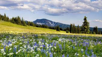 Flowers forests mountains nature Wallpaper