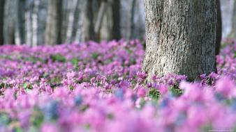 Flowers forests pink trees wildflowers wallpaper