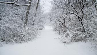 Forests snow trees white widescreen Wallpaper